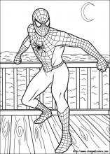 Disegni di spiderman da colorare for Disegni da colorare di spiderman